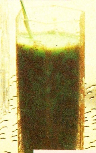 Cóctel Milk Punch verde