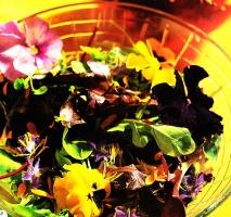 Ensalada de flores y lechugas amargas con vinagreta de Módena