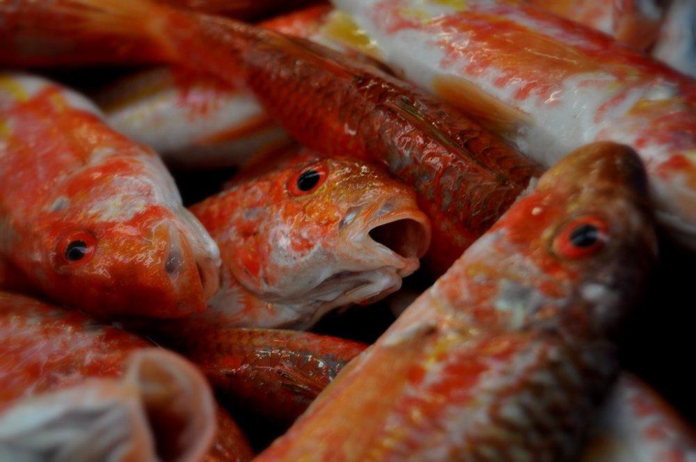 Recetas de salmonetes